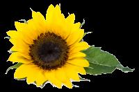 Natura Reformtáplálkozási És Gyógynövény Szaküzlet